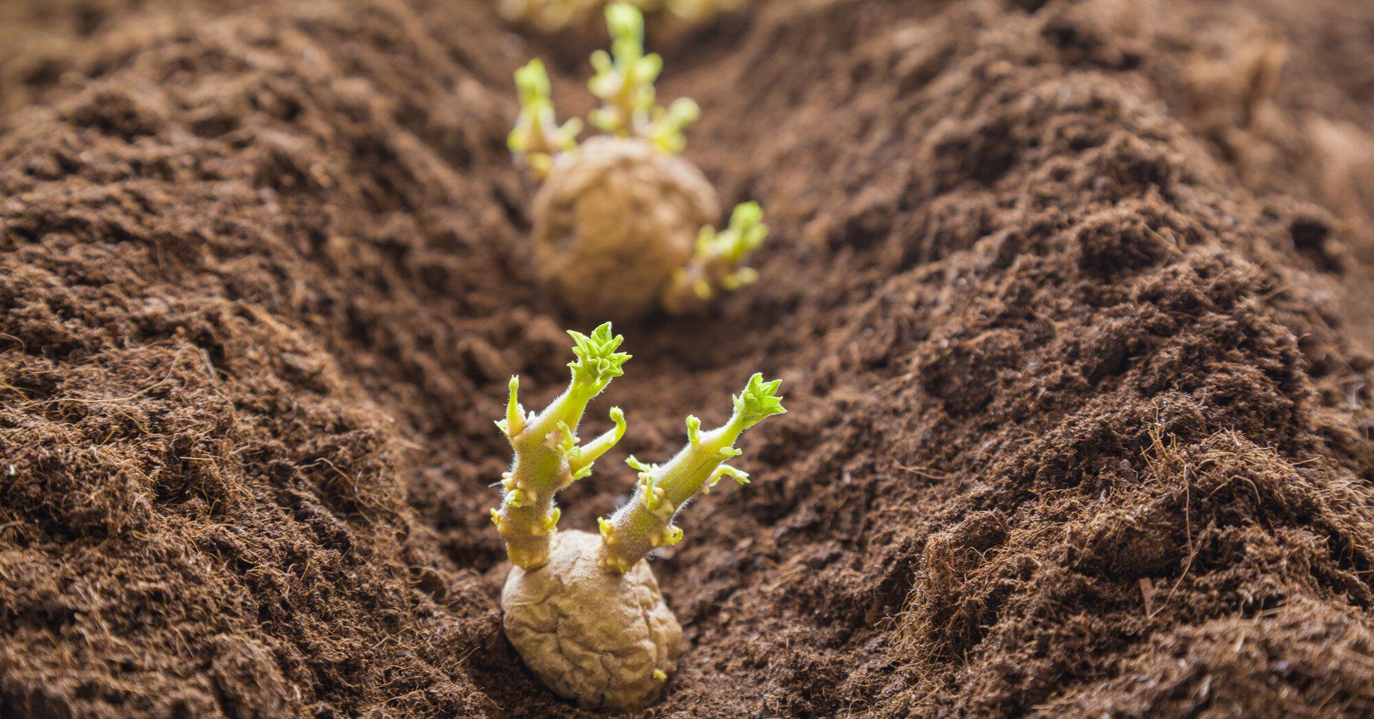 Під Маріуполем городник підірвався, саджаючи картоплю