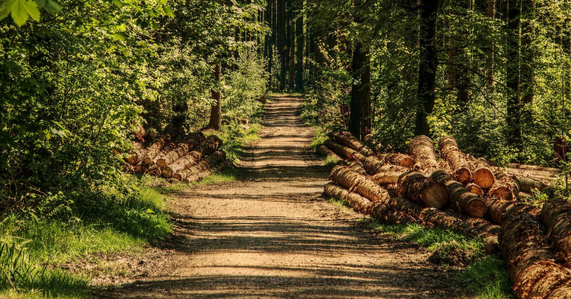Цены на необработанную древесину на аукционе выросли до 350%