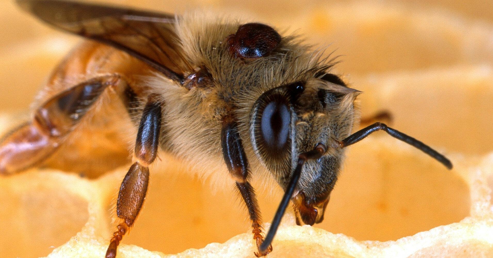 Комаровский объяснил, как спасаться от клещей, комаров и пчел