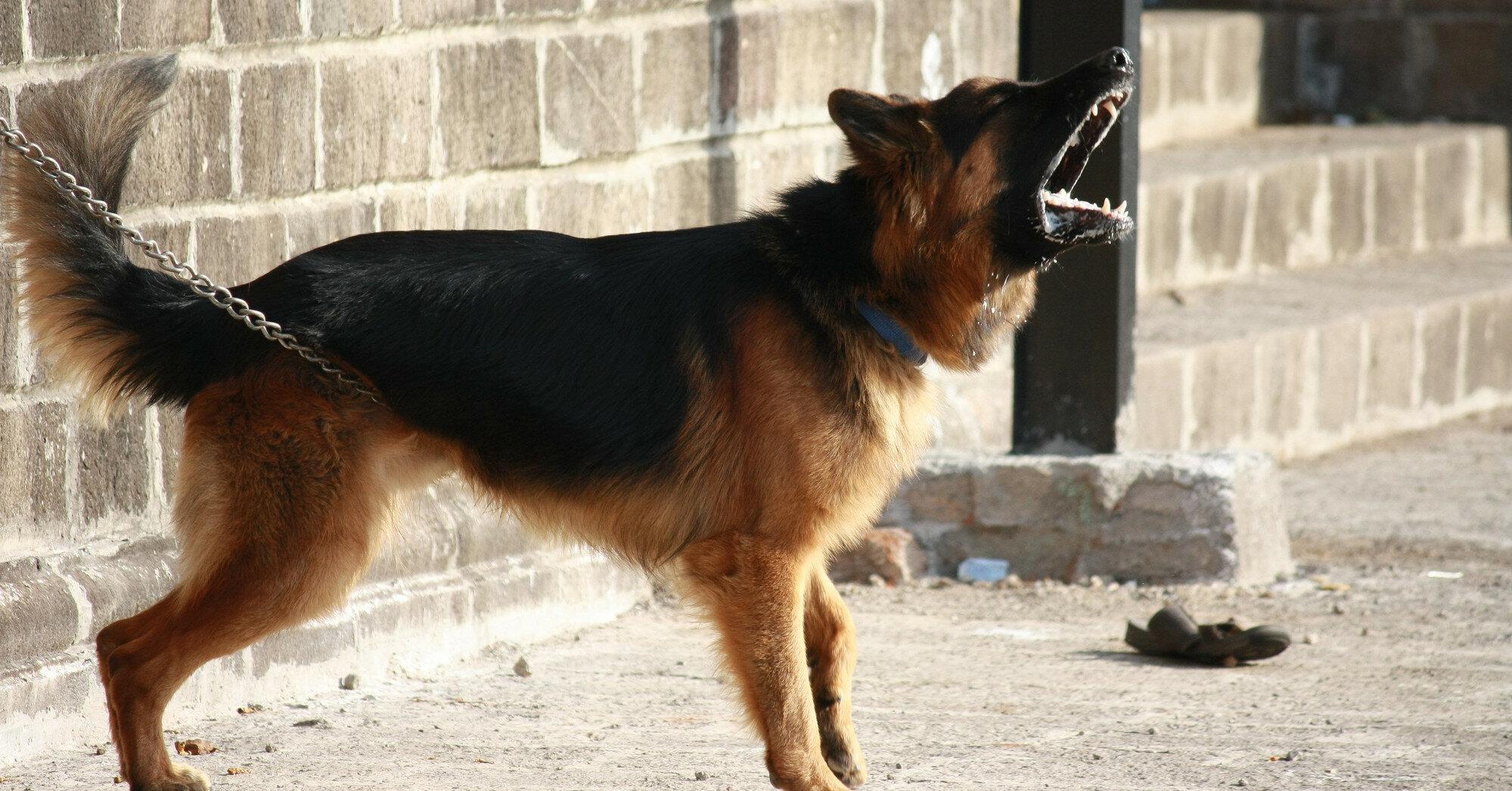 С чем связано агрессивное поведение собак