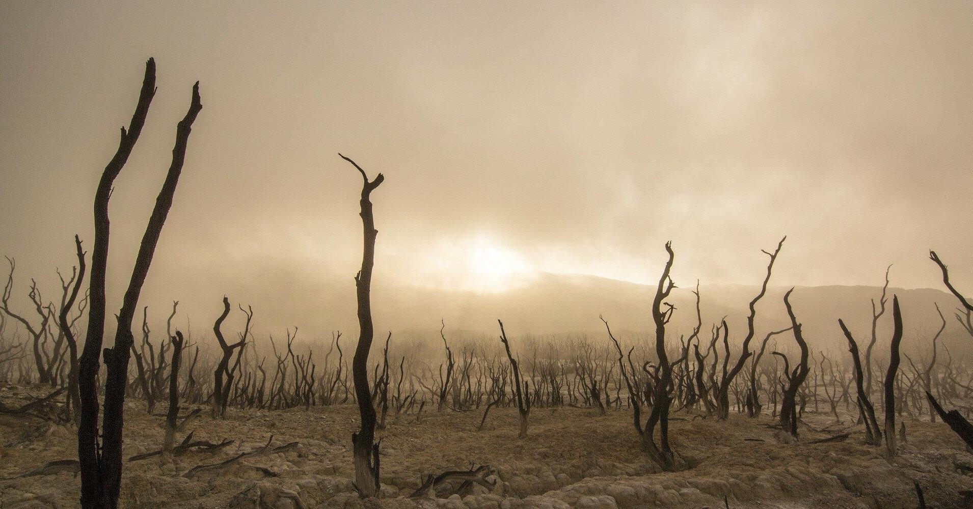 Подсчитано число умерших из-за глобального потепления