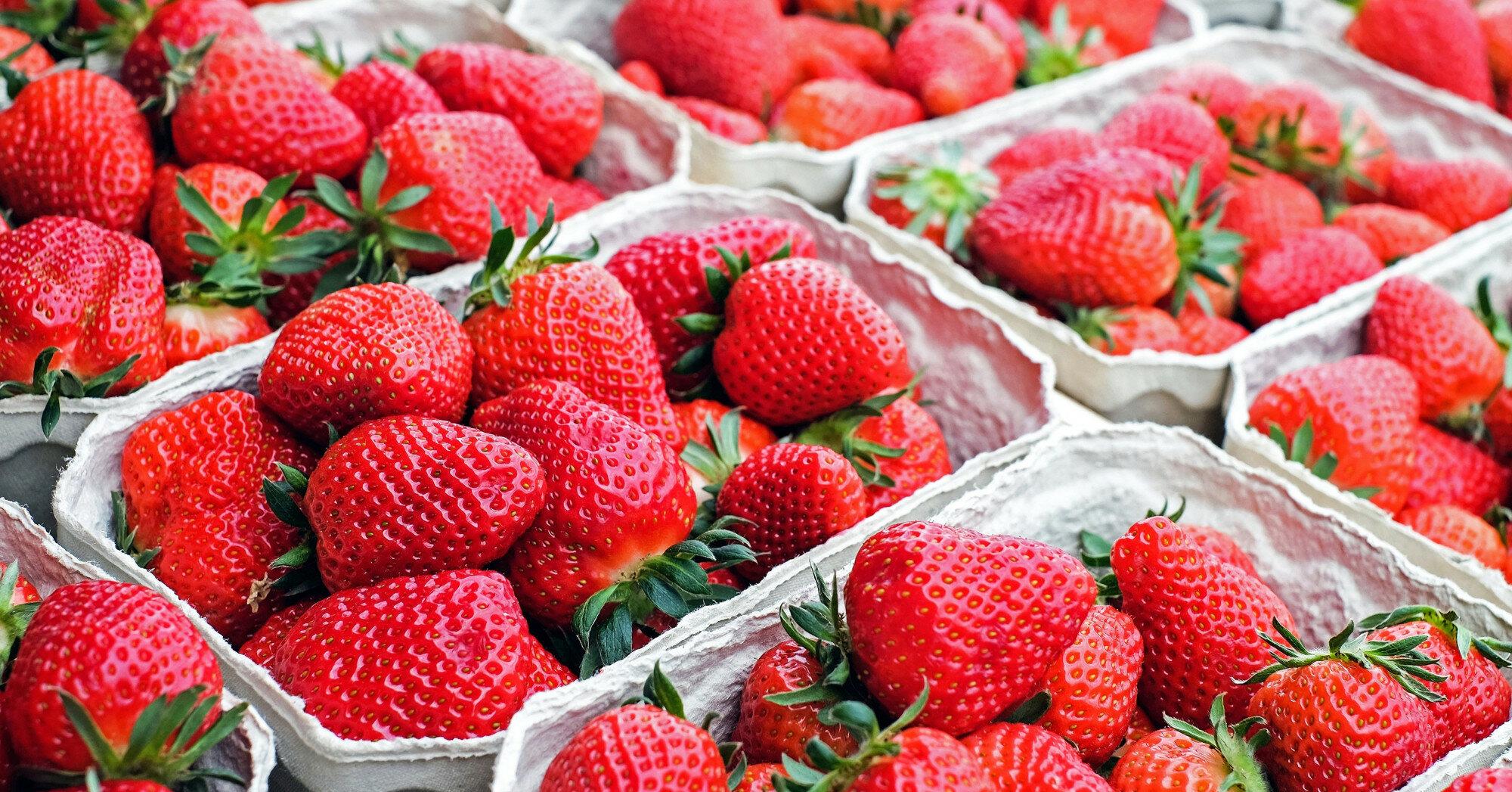 Сбор урожая ягод: сколько платят наши и польские фермеры