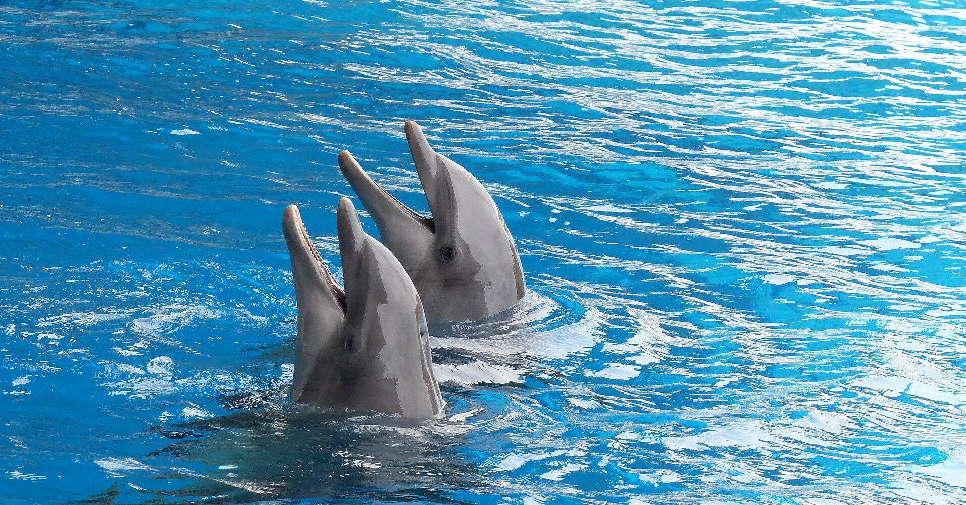 В одесском дельфинарии ребенка укусил дельфин
