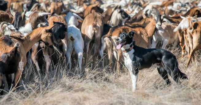 Какое животное приручили после собаки: исследование