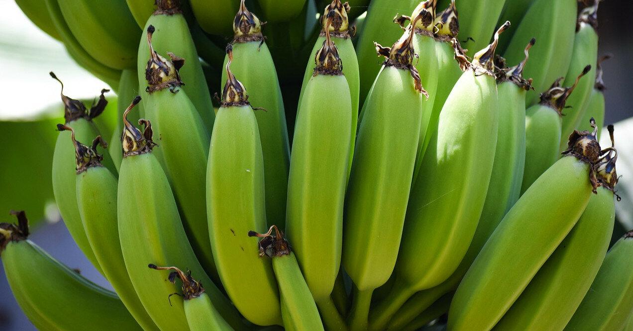 Чем опасны недозрелые и перезрелые бананы