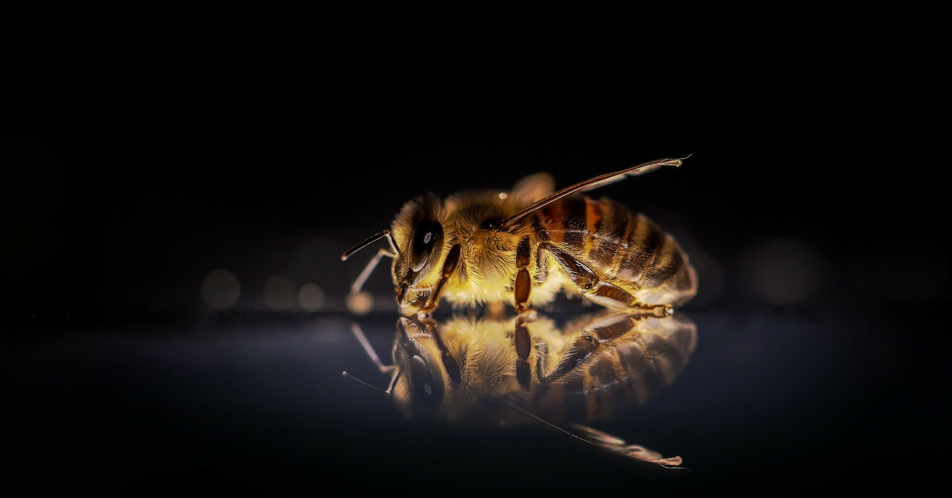 На Ровенщине мужчина умер от укусов пчел