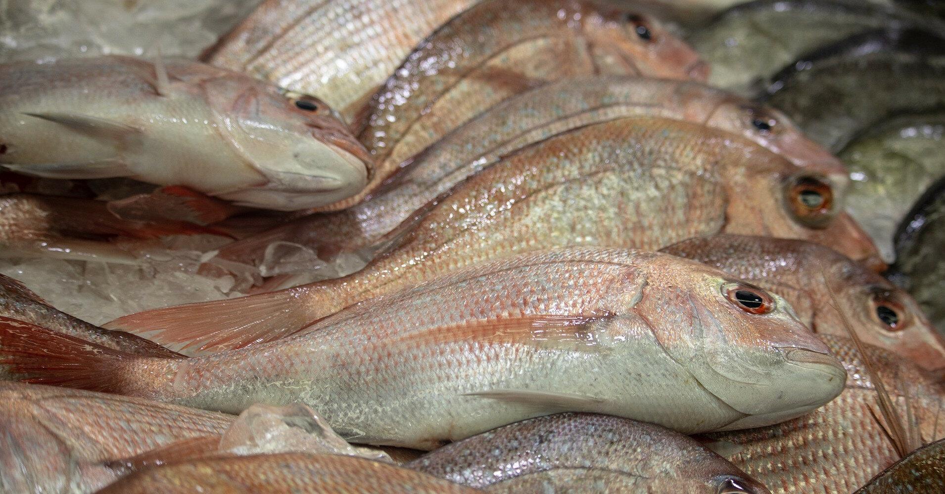 Правила рыболовства изменят: как будут штрафовать нарушителей