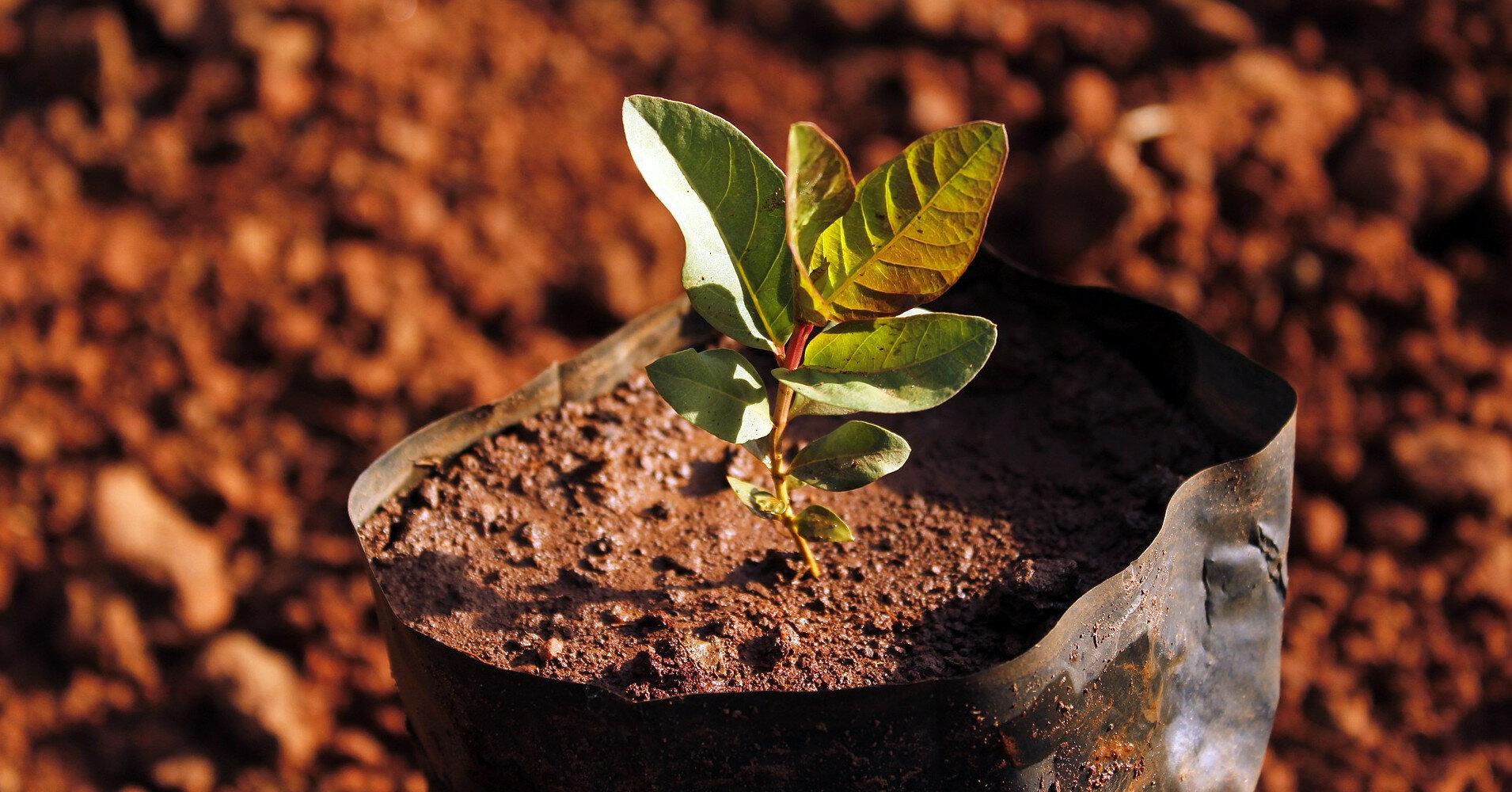 Бюджет проекта по высадке деревьев составит 2 млрд грн