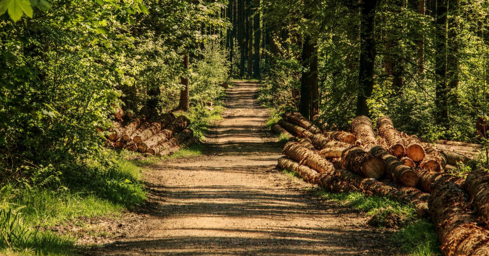 Новые правила продажи древесины значительно увеличили доходы