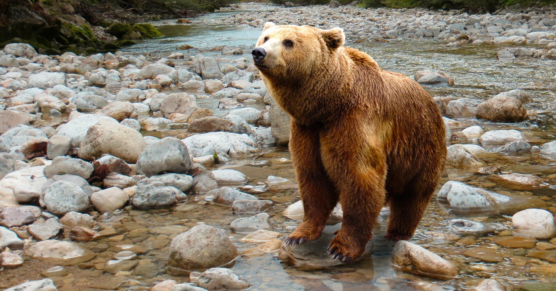В России медведь напал на туристическую группу, погиб подросток
