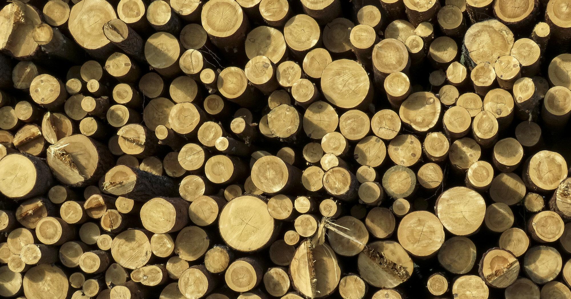 Украинский лес-кругляк покатится в Европу. Что потеряет страна