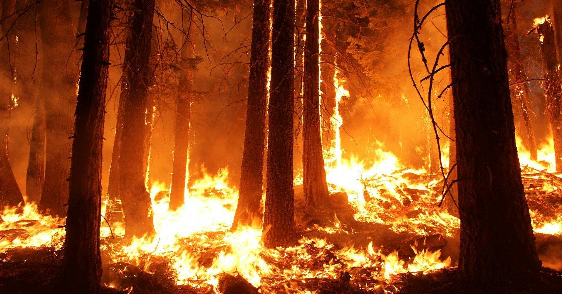 В России горит масштабный участок леса