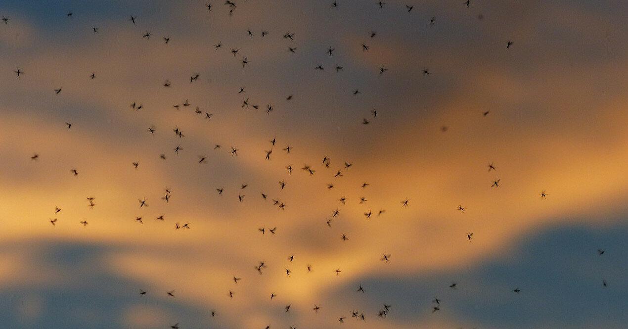 Курорты Украины оккупировали комары: названа причина