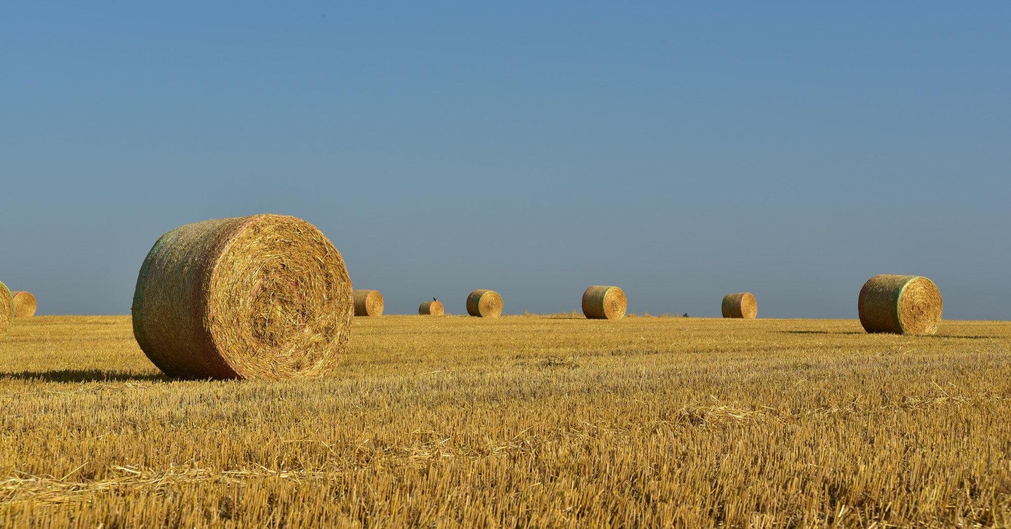 Рынок земли: в Кабмине озвучили стоимость гектара