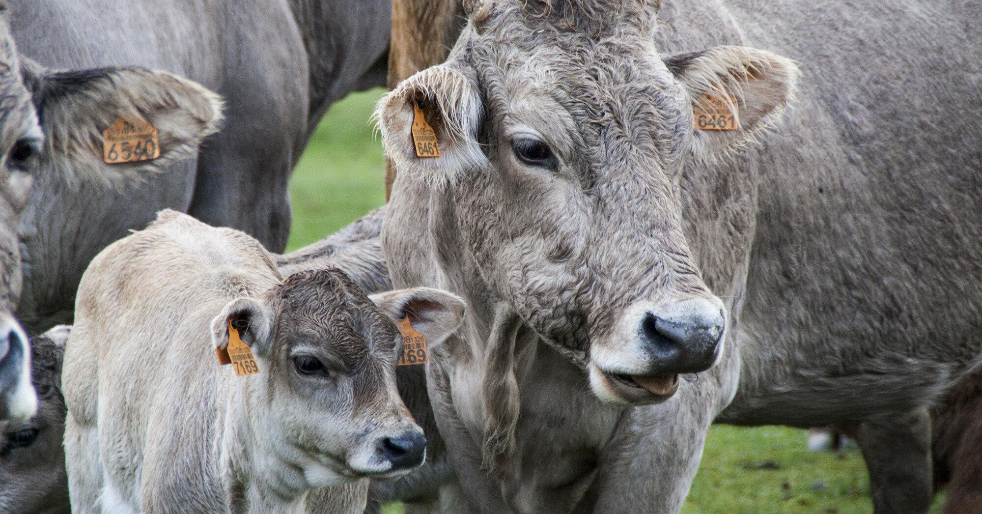 В Украине резко выросли закупочные цены на мясо