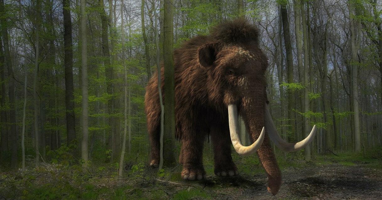 Ученые разгадали причину исчезновения мамонтов