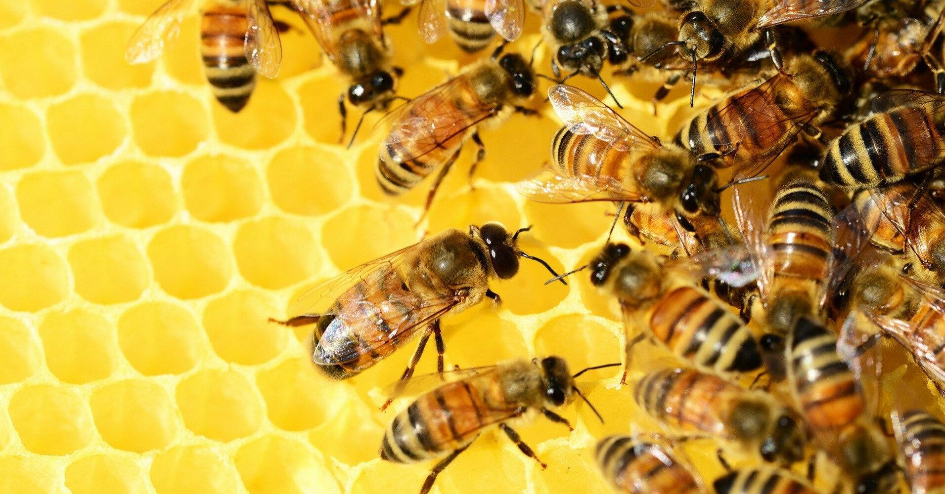 Укрпошта временно прекратила доставку пчел