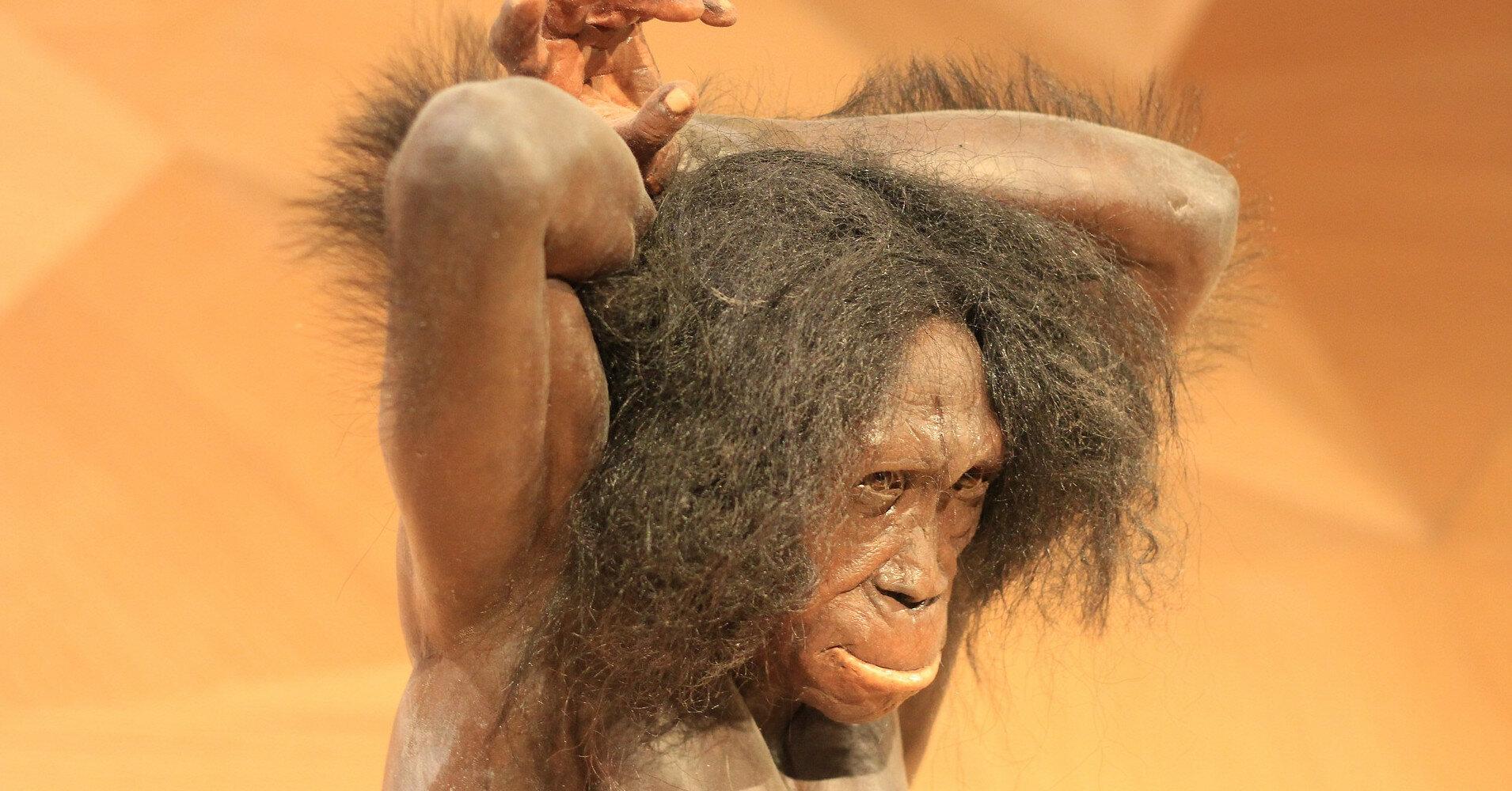 Обнаружен древнейший орнамент, возрастом 51 тыс. лет