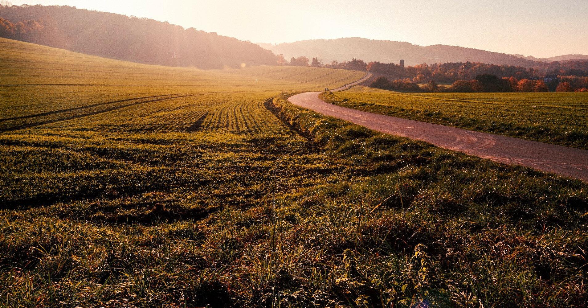 Рынок земли: в каких регионах активнее скупают участки