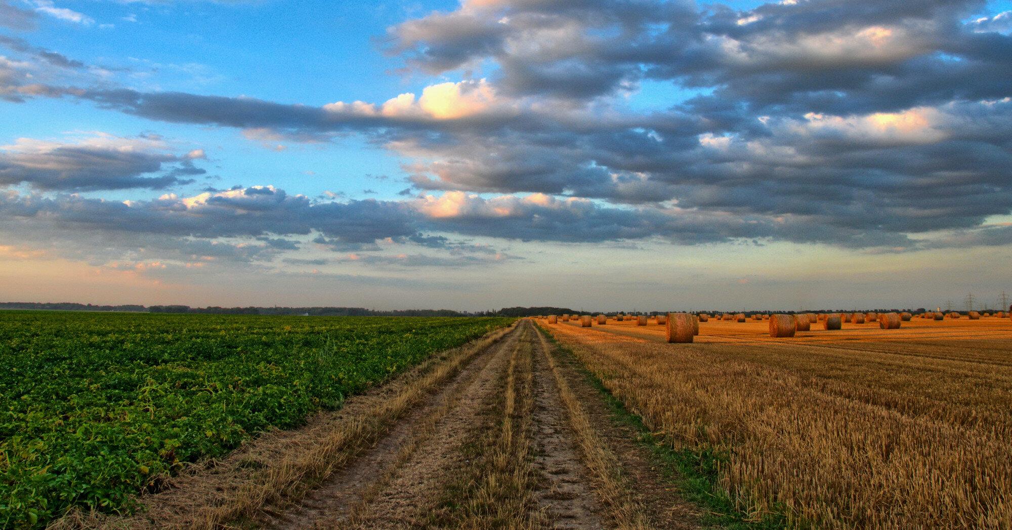 Рынок земли в Украине поставили на паузу