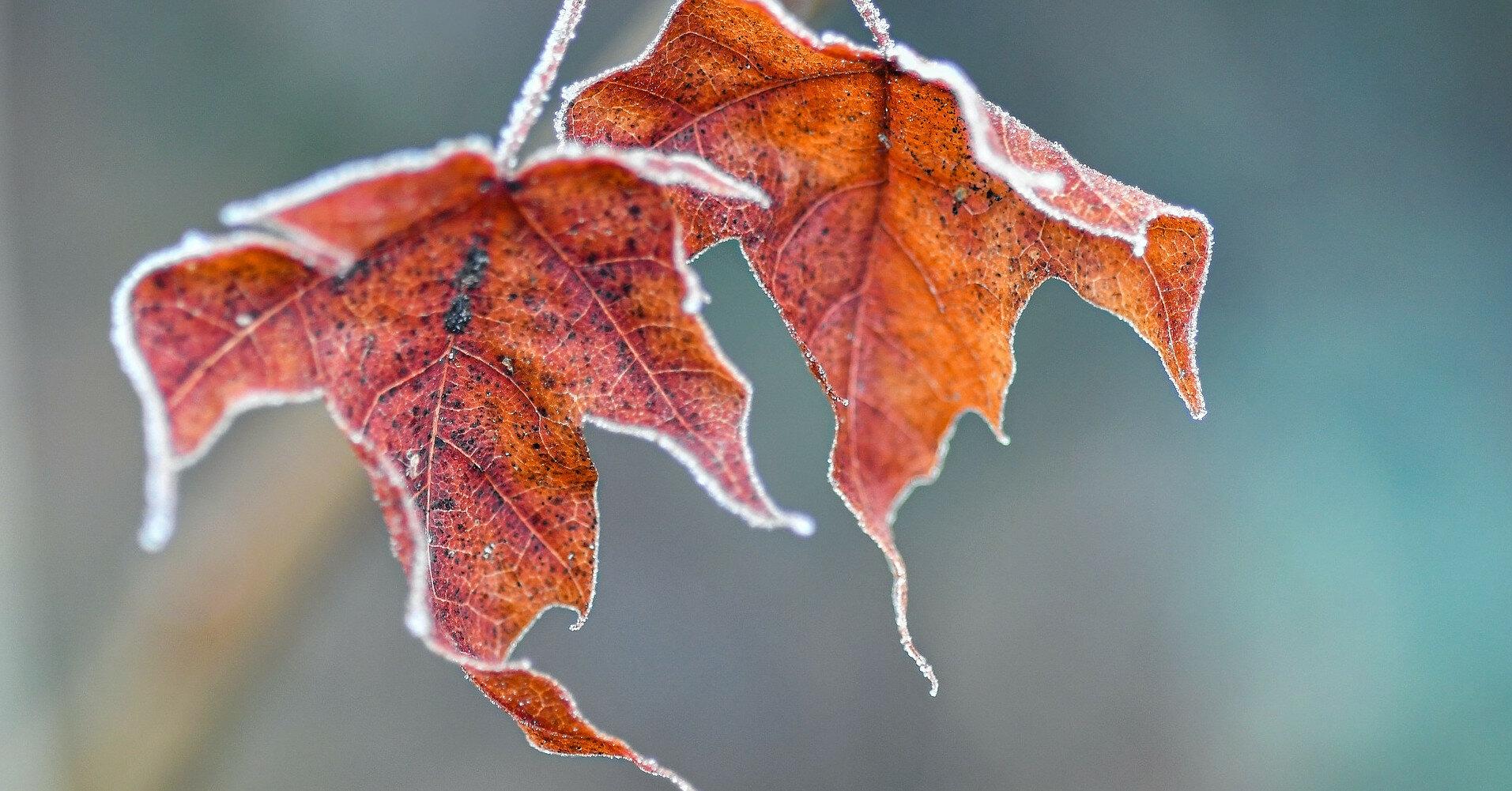 Синоптик дал неожиданный прогноз на осень