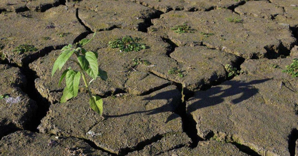 Прогноз погоды на 14 июля: жарко, солнечно и безоблачно