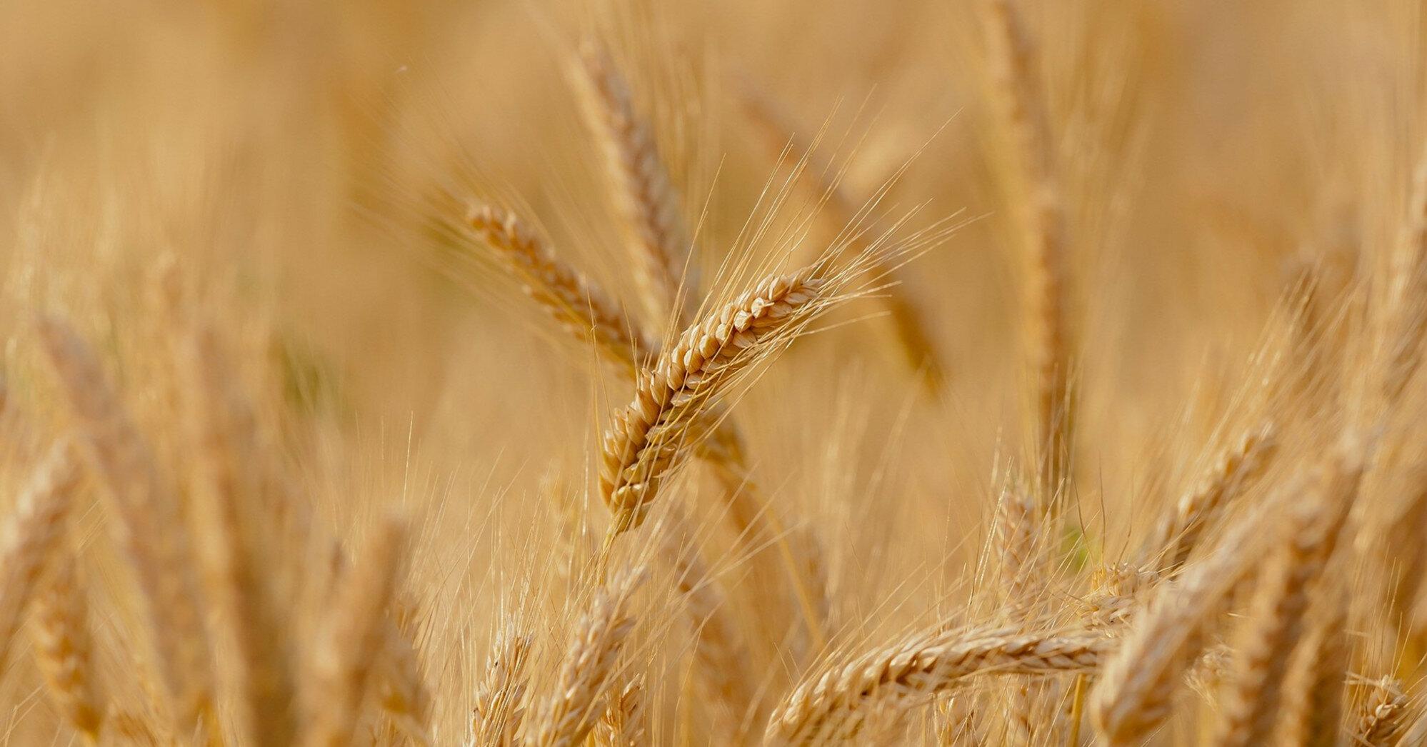 Україна повторить рекорд експорту зерна: прогноз