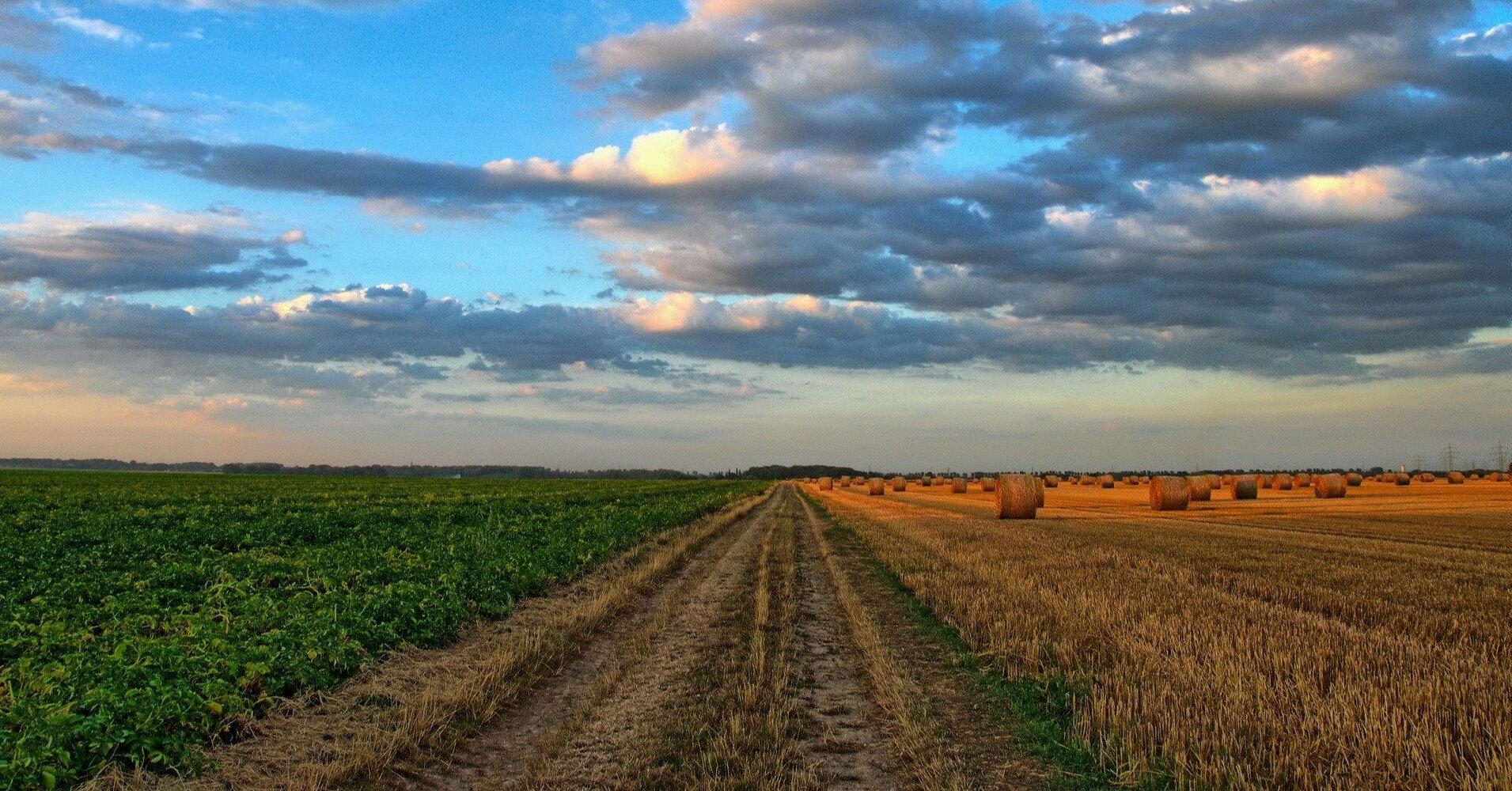 Нардепы предлагают ограничить покупку свыше 500 га земли