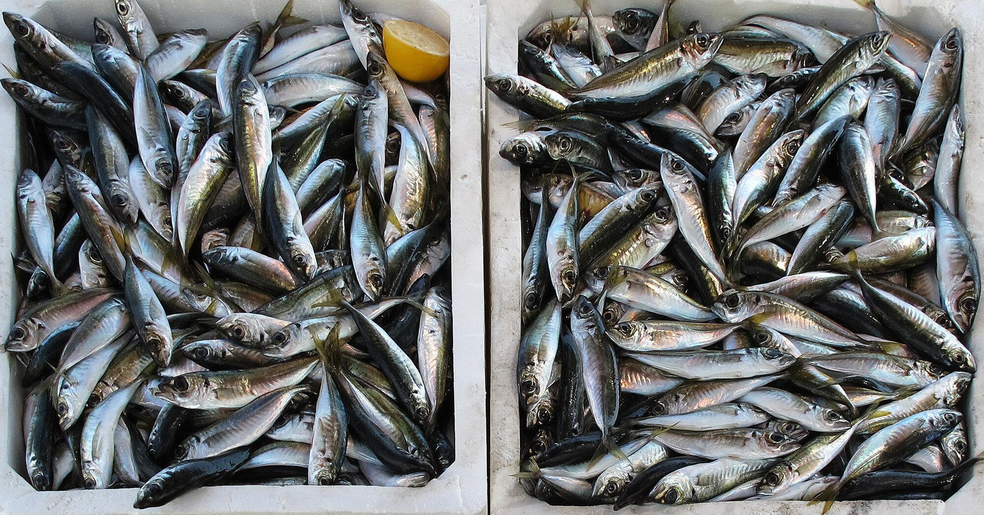 Экспорт украинской рыбы увеличился: крупнейшие покупатели