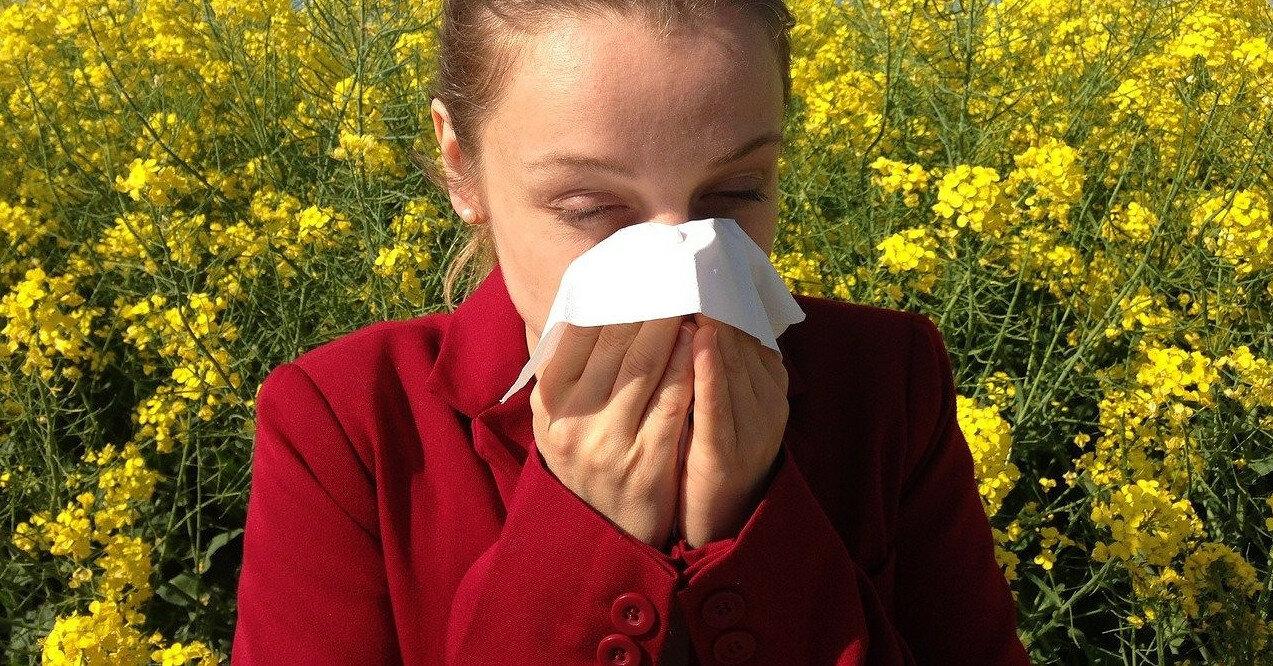 Аллергия на амброзию: признаки и лечение