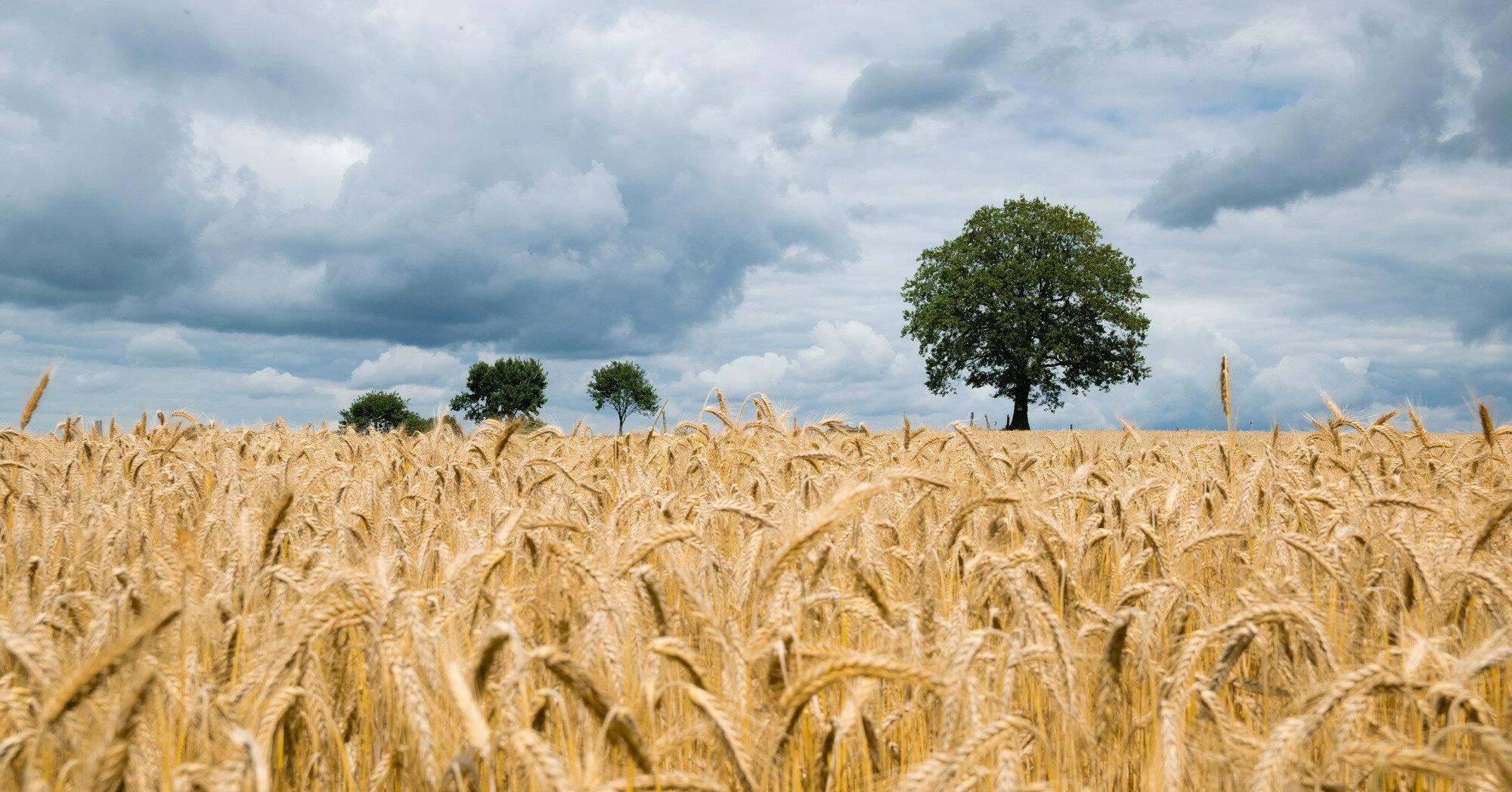 18 августа - какой сегодня праздник, приметы и именинники
