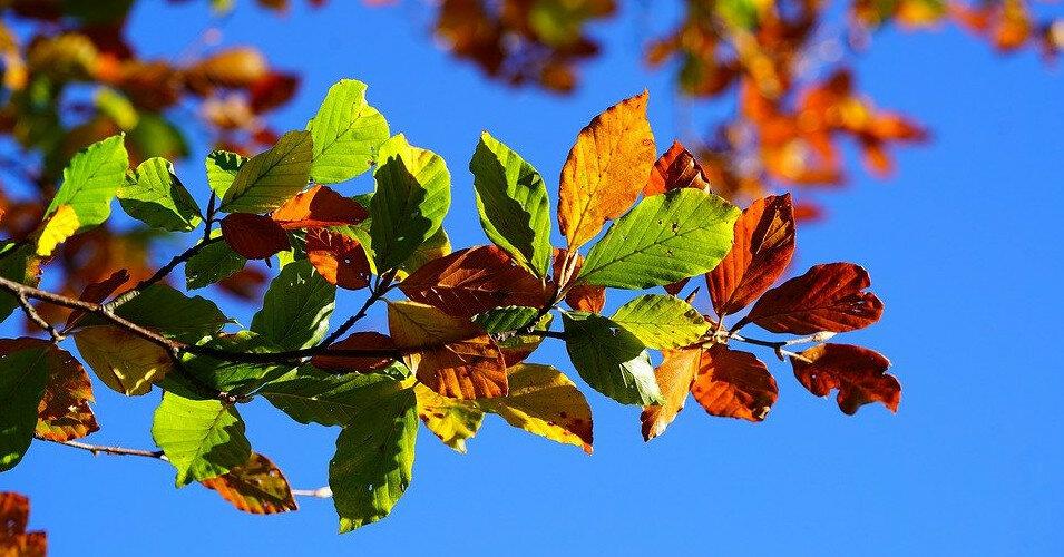 От +6 до +26: какую погоду принесет первый месяц осени