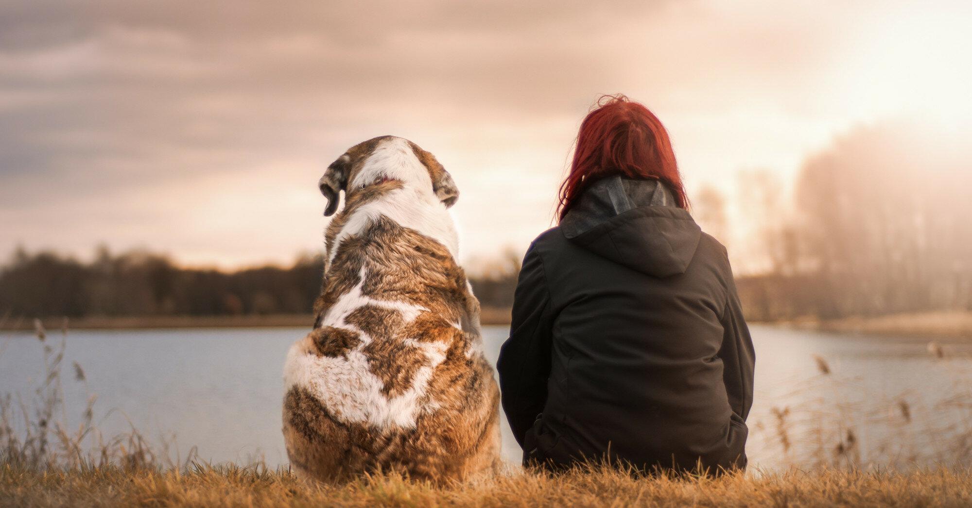 Полезно ли обнимать собак: что говорят ученые