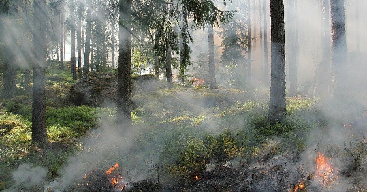 Ряд областей предупредили о чрезвычайной пожарной опасности