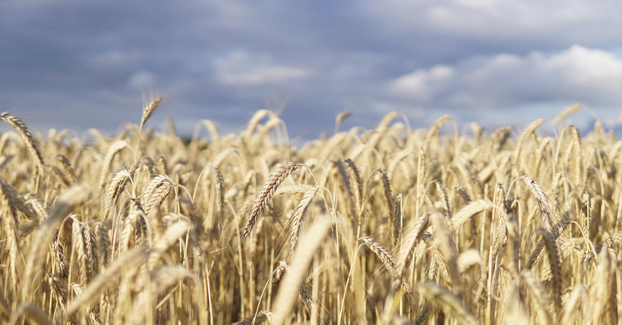 Украина ускоряет темпы экспорта зерна