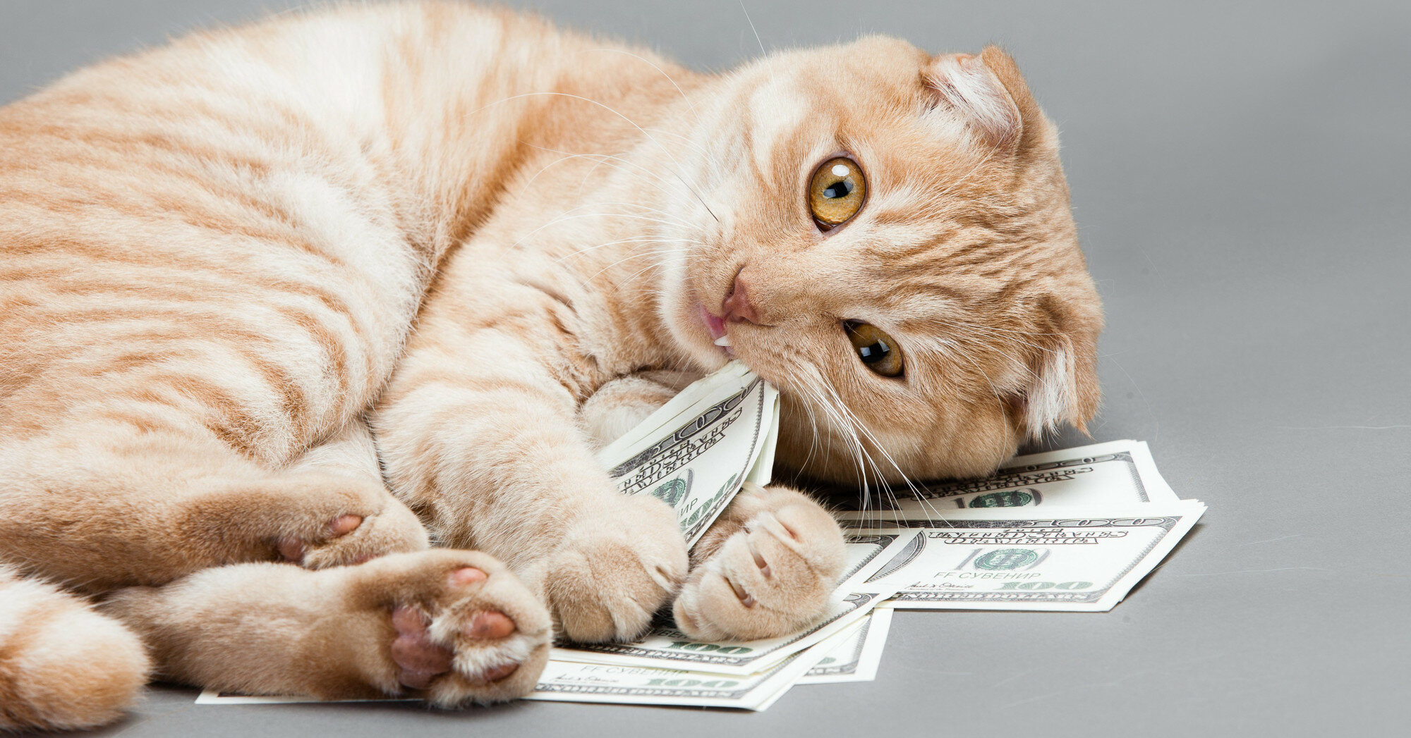 Курс валют: итоги понедельника
