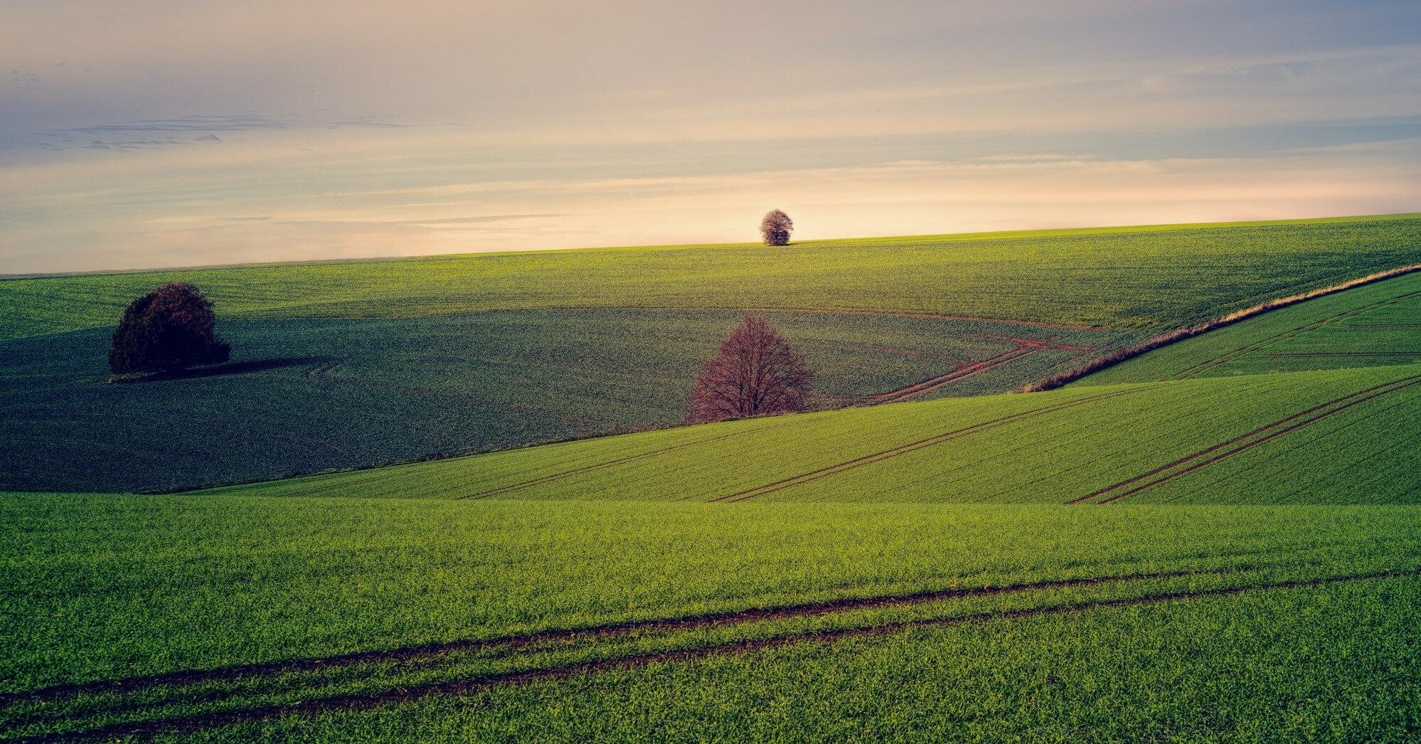 Рынок земли: украинцы уже подписали 4 тысячи договоров