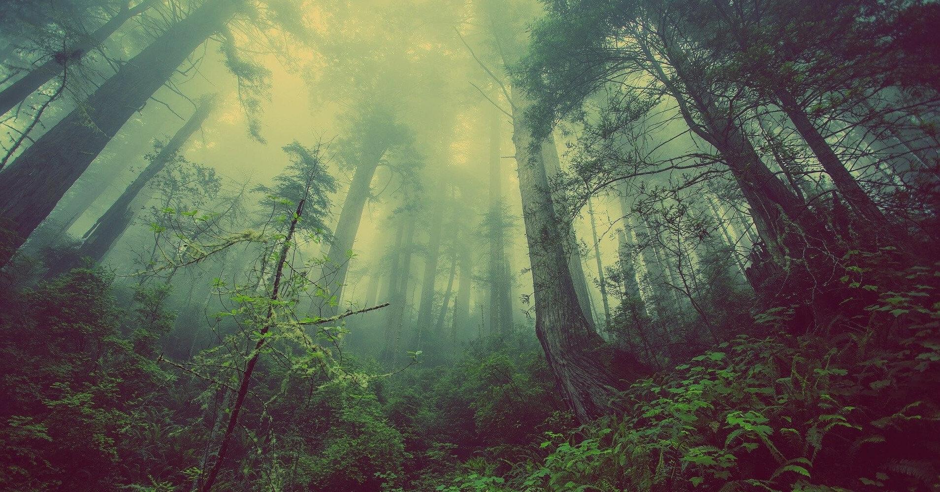 Выявлена опасность восстановления лесов
