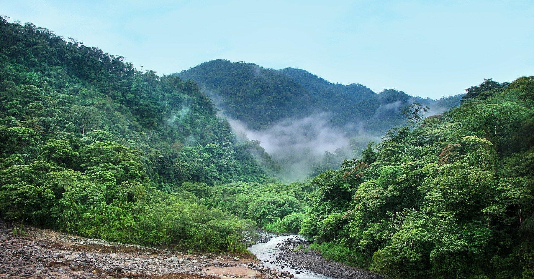 Гибнущие леса оказались спасителями планеты